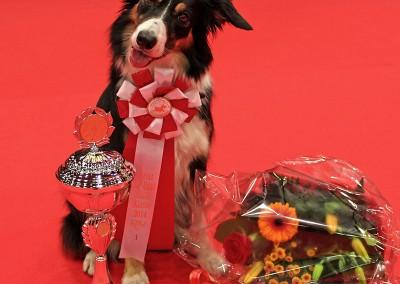 Luk-Årets-hund